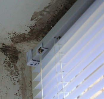 Уничтожение грибка на стенах